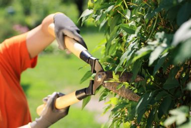 08_Grip_Surprising_Health_benefits_Gardening