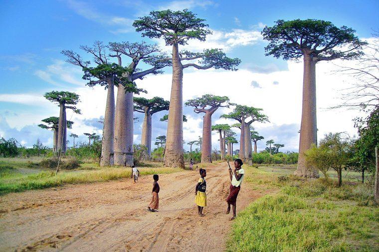 09-these-captivating-Images-of-Amazing-Trees