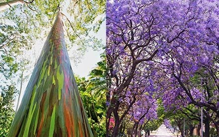 12 Jaw-Dropping Pictures of the World's Most Amazing Trees