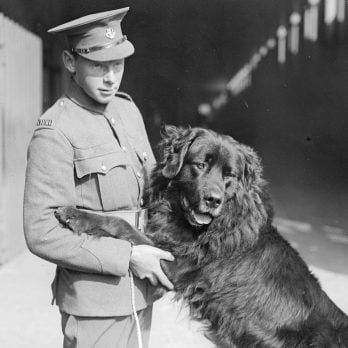 How This Adorable Stray Pup Joined the Ranks During World War I