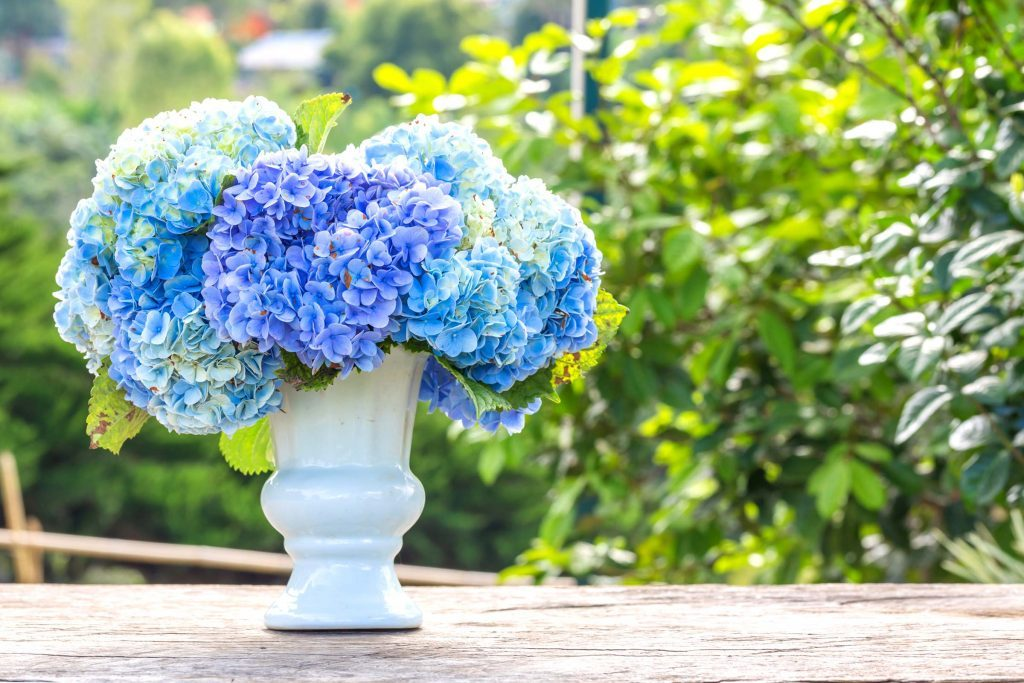 Make The Cut >> How To Make Cut Hydrangeas Last Longer Reader S Digest