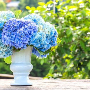 How to Make Your Cut Hydrangeas Last Longer, According to a Florist