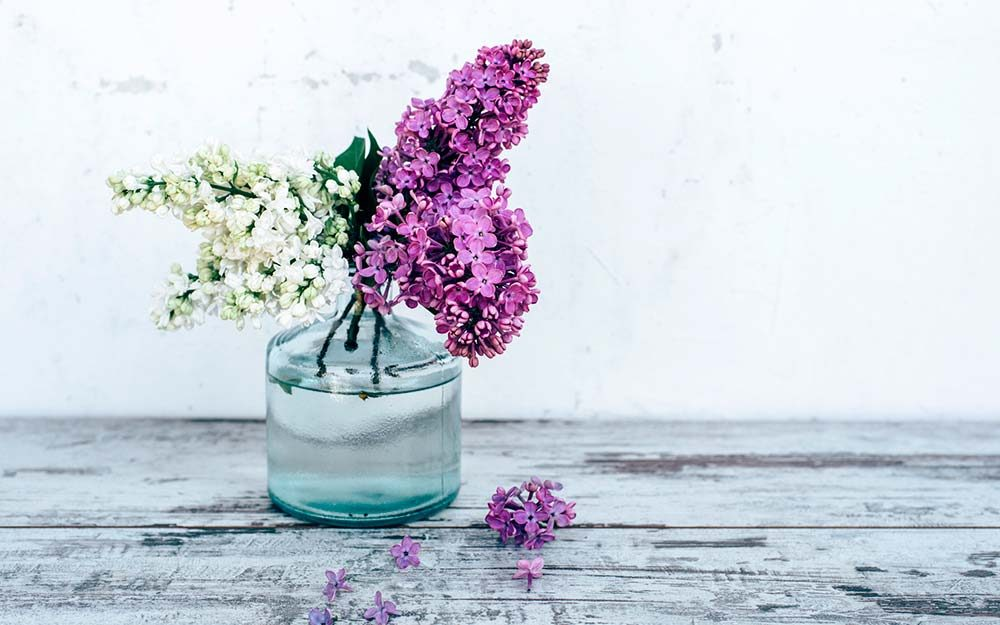6deecc0b31e8 The Smell of Lilacs Reminds me of Home