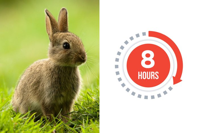 01-rabbits-You-vs.-These-Adorable-Animals--Who-Sleeps-More