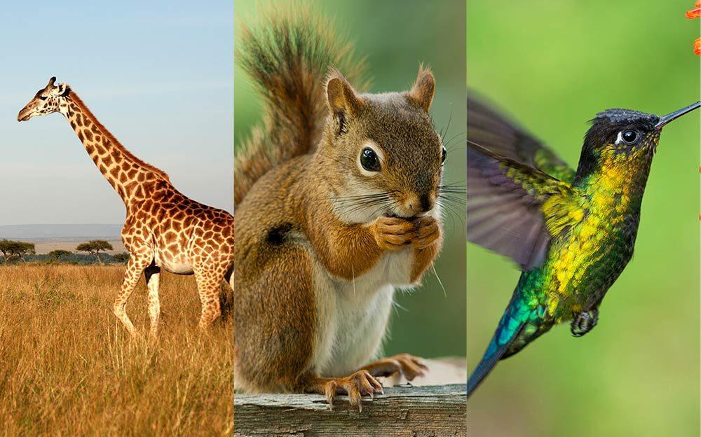 012_Wild_animals_species