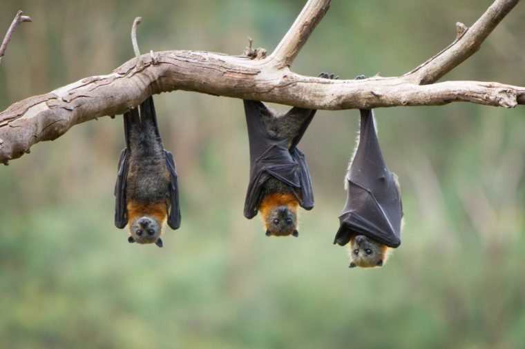 01_bats_of_the_luckiest
