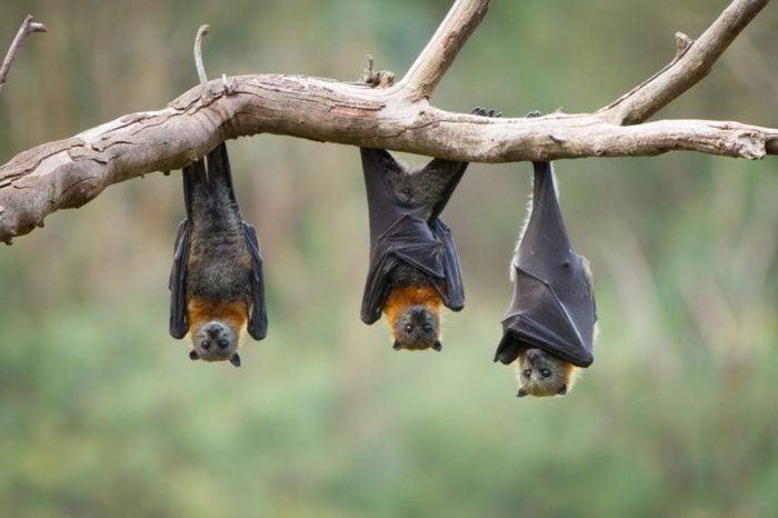 01_bats_of_the_luckiest