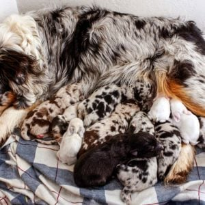 Meet the Adorable Mama Dog Who Fostered Baby Bunnies