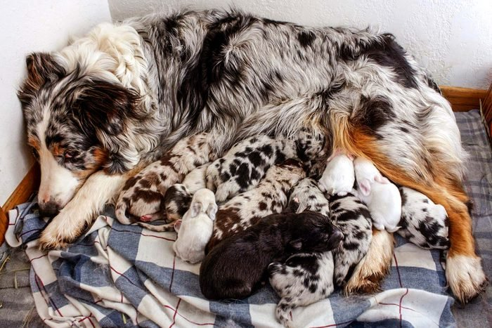 This-Adorable-Doggy-Mom-Fostered