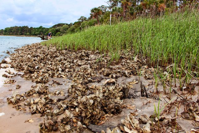 02-What-It's-Like-to-Own-and-Operate-an-Oyster-Farm