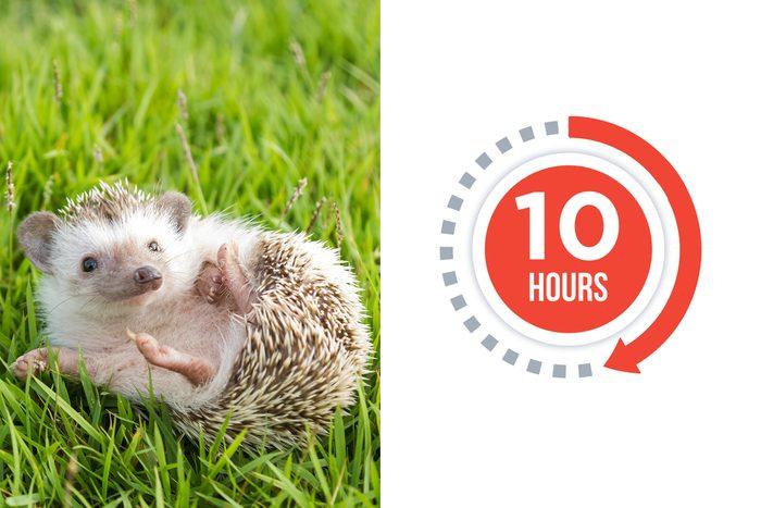 02-hedgehog-You-vs.-These-Adorable-Animals--Who-Sleeps-More