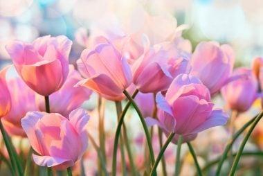 020_Ways_to_spring_clean_health