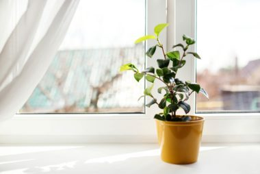 03_windowsill_little_things_you_