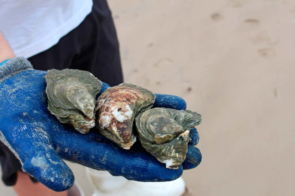 04-What-It's-Like-to-Own-and-Operate-an-Oyster-Farm