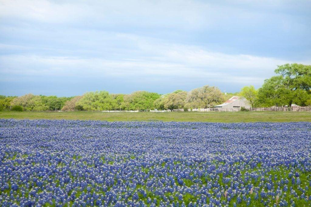 05-ennis-texas-american-destinations-spring-521212120-fstop123
