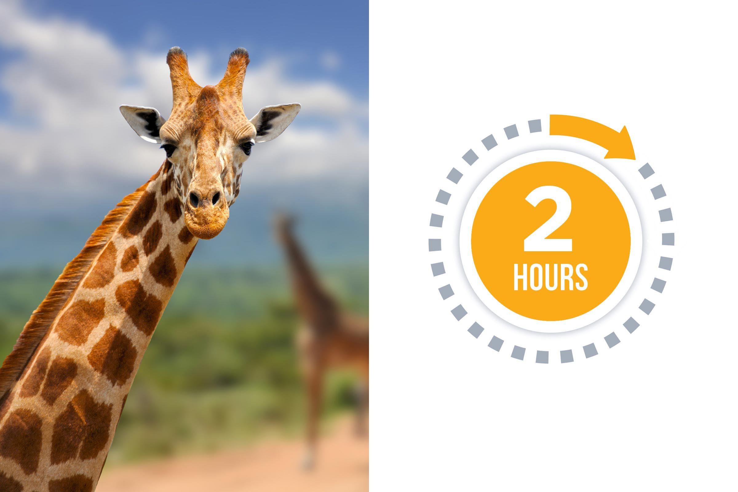 05-giraffe-You-vs.-These-Adorable-Animals--Who-Sleeps-More