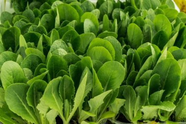 05_Spinach_Immune_boosting_foods