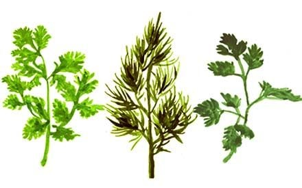 Kick Off Gardening Season Early with These Cool-Weather Herbs