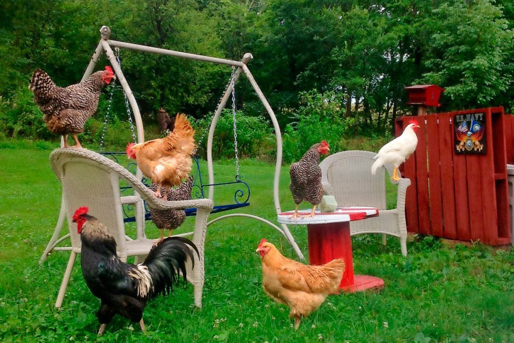 06-These-Photos-of-the-Country-Will-Make-You-Want-to-Move-to-a-Farm