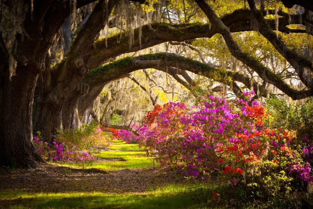 06-charleston-south-carolina-american-destinations-spring-177031990-WerksMedia