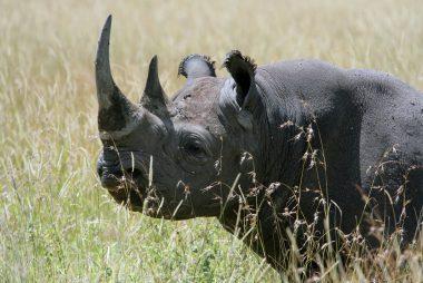 Inilah 5 hewan yang nggak disangka sedang terancam kepunahan (dok. Reader's Digest)