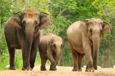 09_Wild_animals_species