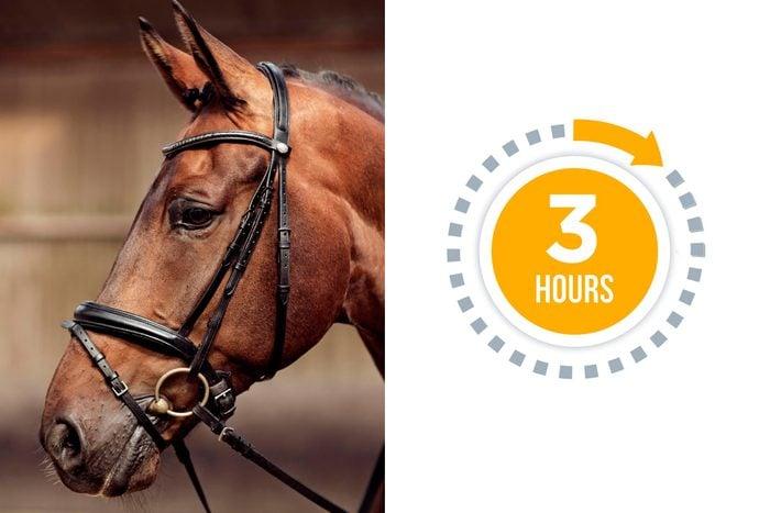 09a-horse-You-vs.-These-Adorable-Animals--Who-Sleeps-More