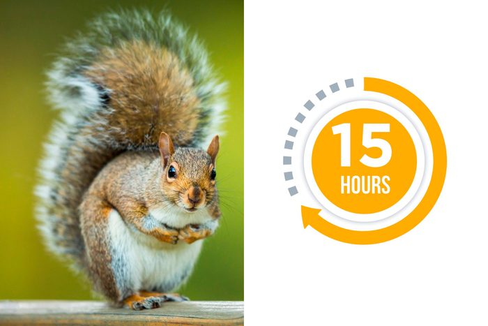 10-squirrel-You-vs.-These-Adorable-Animals--Who-Sleeps-More