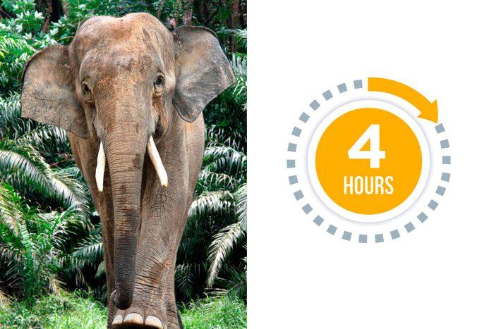 12a-elephants-You-vs.-These-Adorable-Animals--Who-Sleeps-More