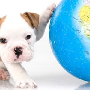 Quiz: Are These Funky Names Dog Breeds or World Capitals?