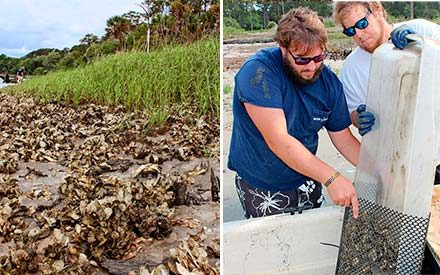 Look Out, World! These Farmers Are Saving the Environment One Oyster at a Time