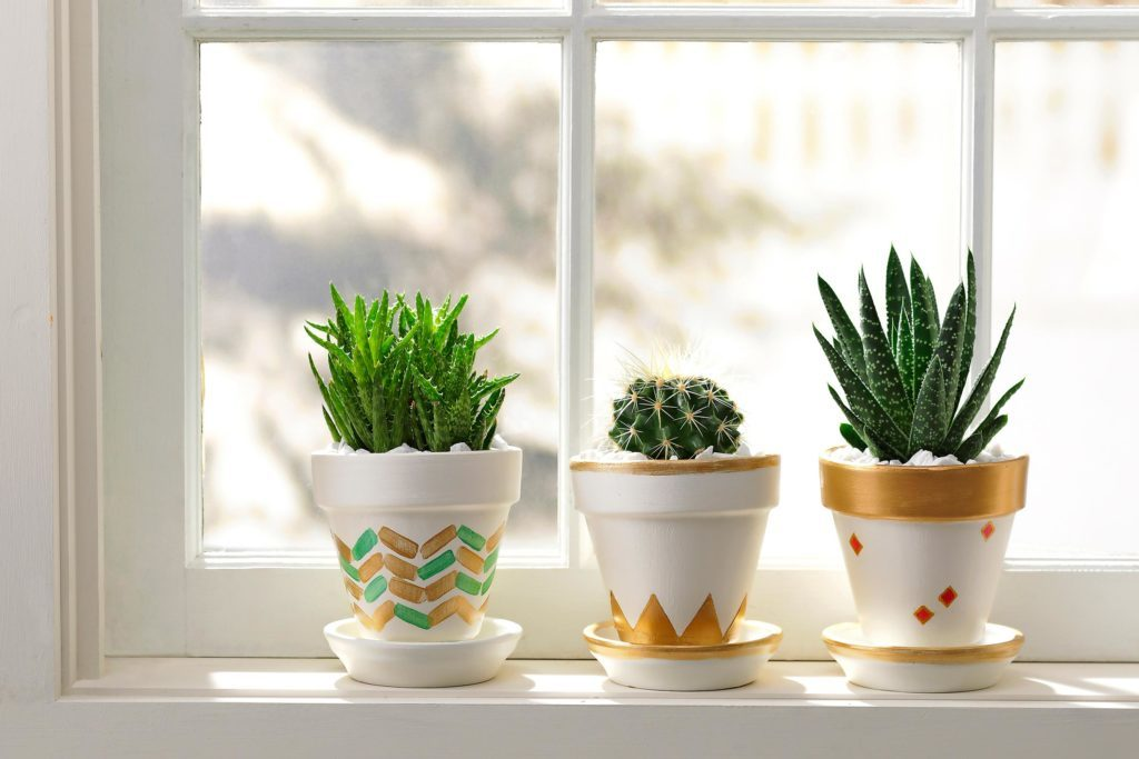 how-to-pot-cacti-most-adorable-way