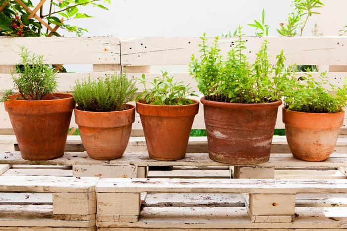 potted plants in line