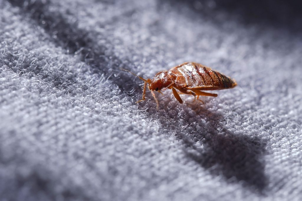 How To Spot Bed Bugs In Your Hotel Room Reader S Digest