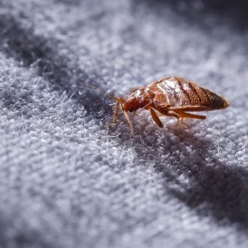 This Is How to Spot Bed Bugs in Your Hotel Room