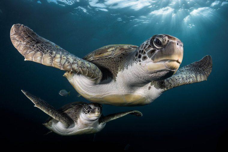01-Underwater-Photos-You-Will-Not-Believe-Greg-LECOEUR