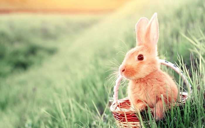 Why-Are-Bunnies-So-Popular-for-Easter