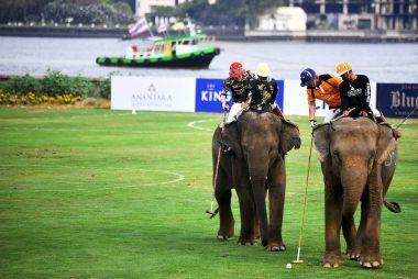 Elephants-play-polo