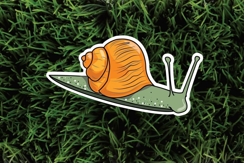 Snails. The-6-Most-Pesky-Garden-Pests-and-How-