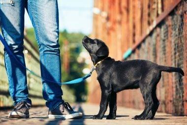 walk-pup-on-leash