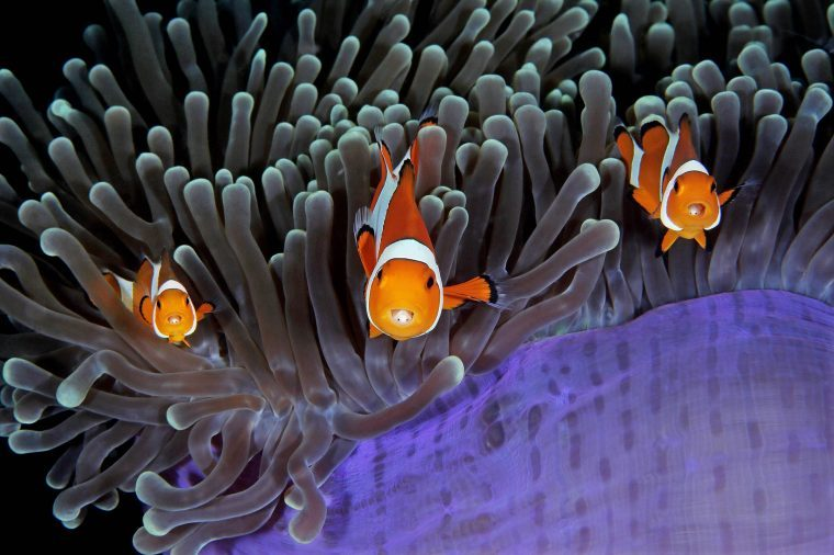 03-Underwater-Photos-You-Will-Not-Believe-Qing-Lin