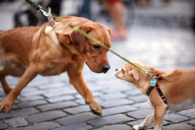 respect-pets