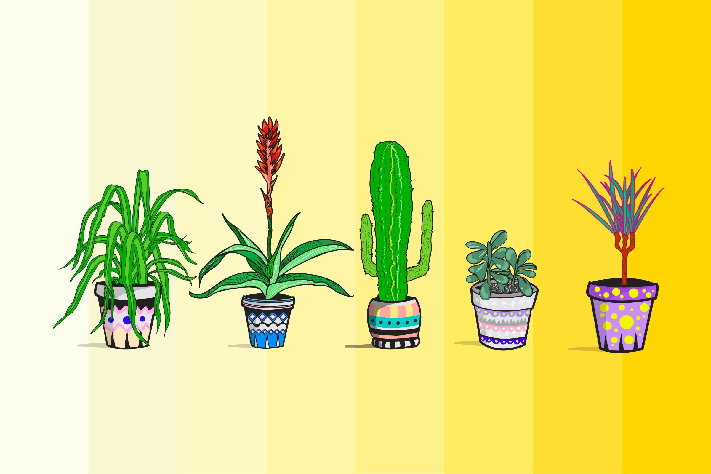 Best-Plants-to-Detoxify-Your-Home