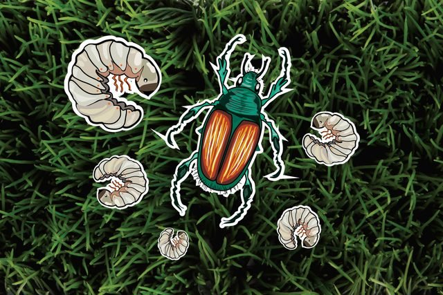 The-6-Most-Pesky-Garden-Pests-and-How-to-Get-Rid-of-Them-Naturally