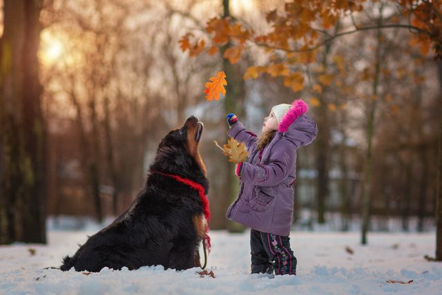 06_Little-Kids-and-Their-Big-Dogs-COVER-HI-RES