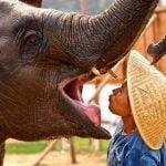 How Elephant Polo Is Saving the Elephants—and Kids with Autism