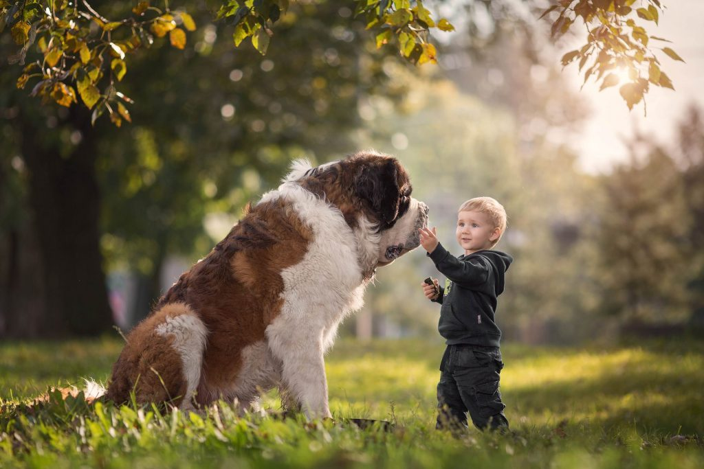 08_Little-Kids-and-Their-Big-Dogs-COVER-HI-RES