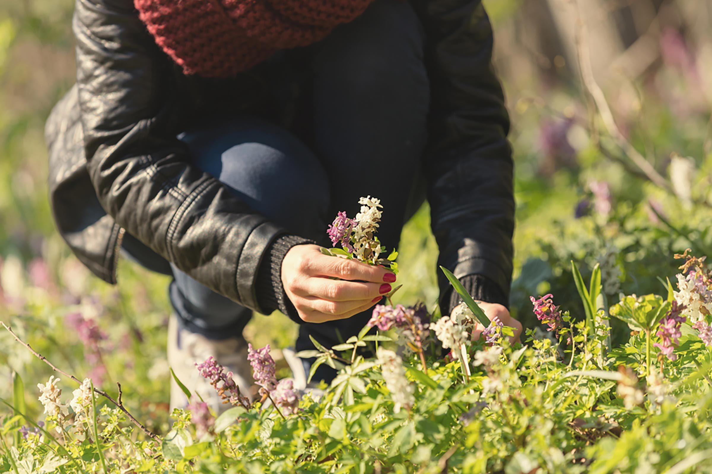 pickingflowers