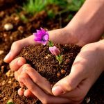 25 Simple Swaps to Reduce Your Carbon Footprint