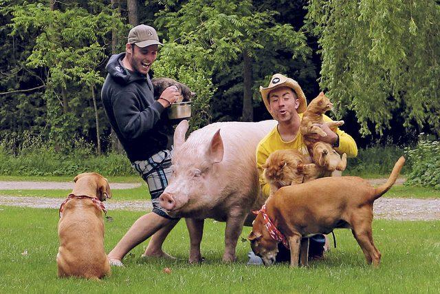 April-2017-FEA-pig-changed-life-courtesy-steve-jenkins-and-derek-walter-04